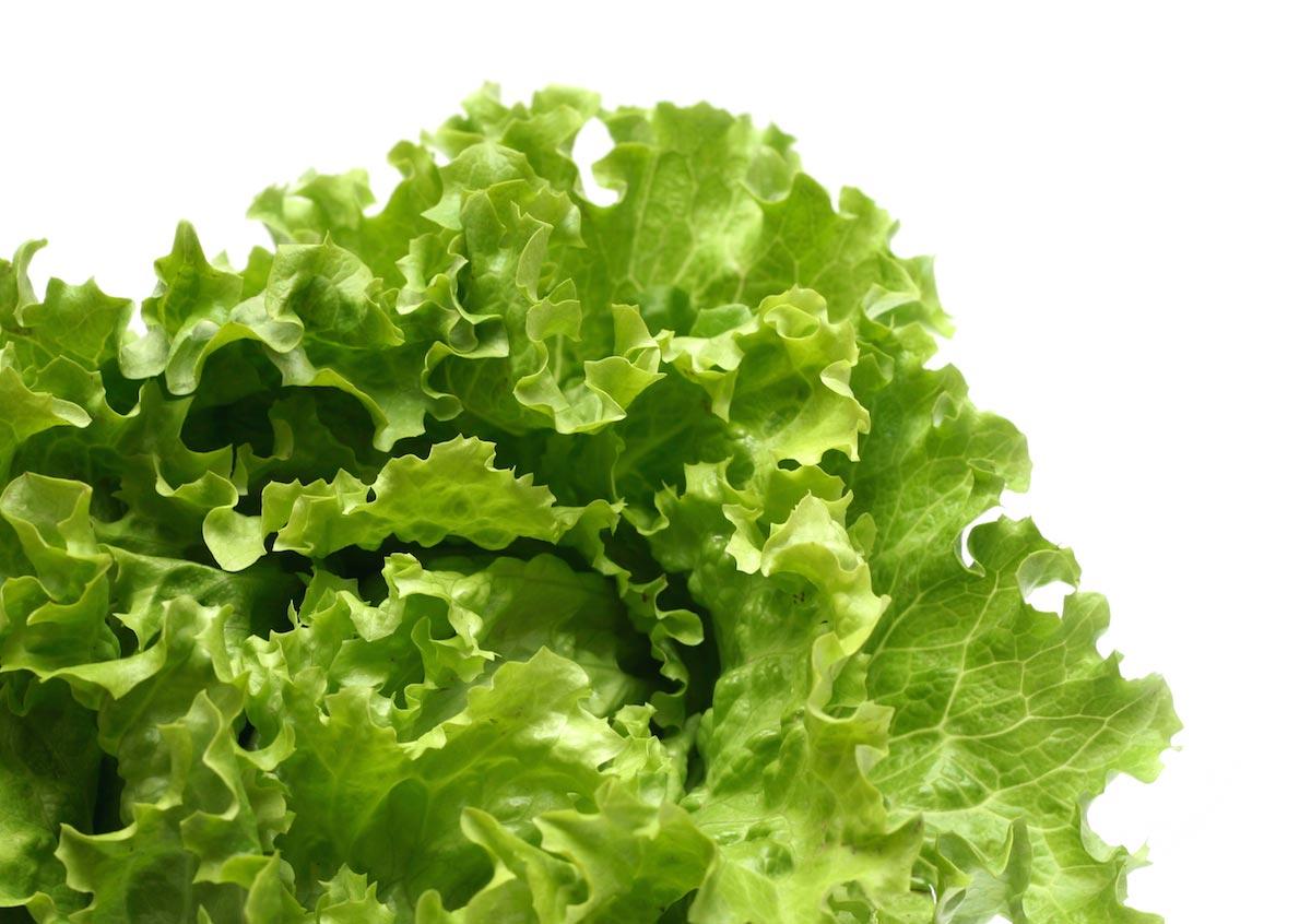 Grow bigger, better, crunchier lettuce