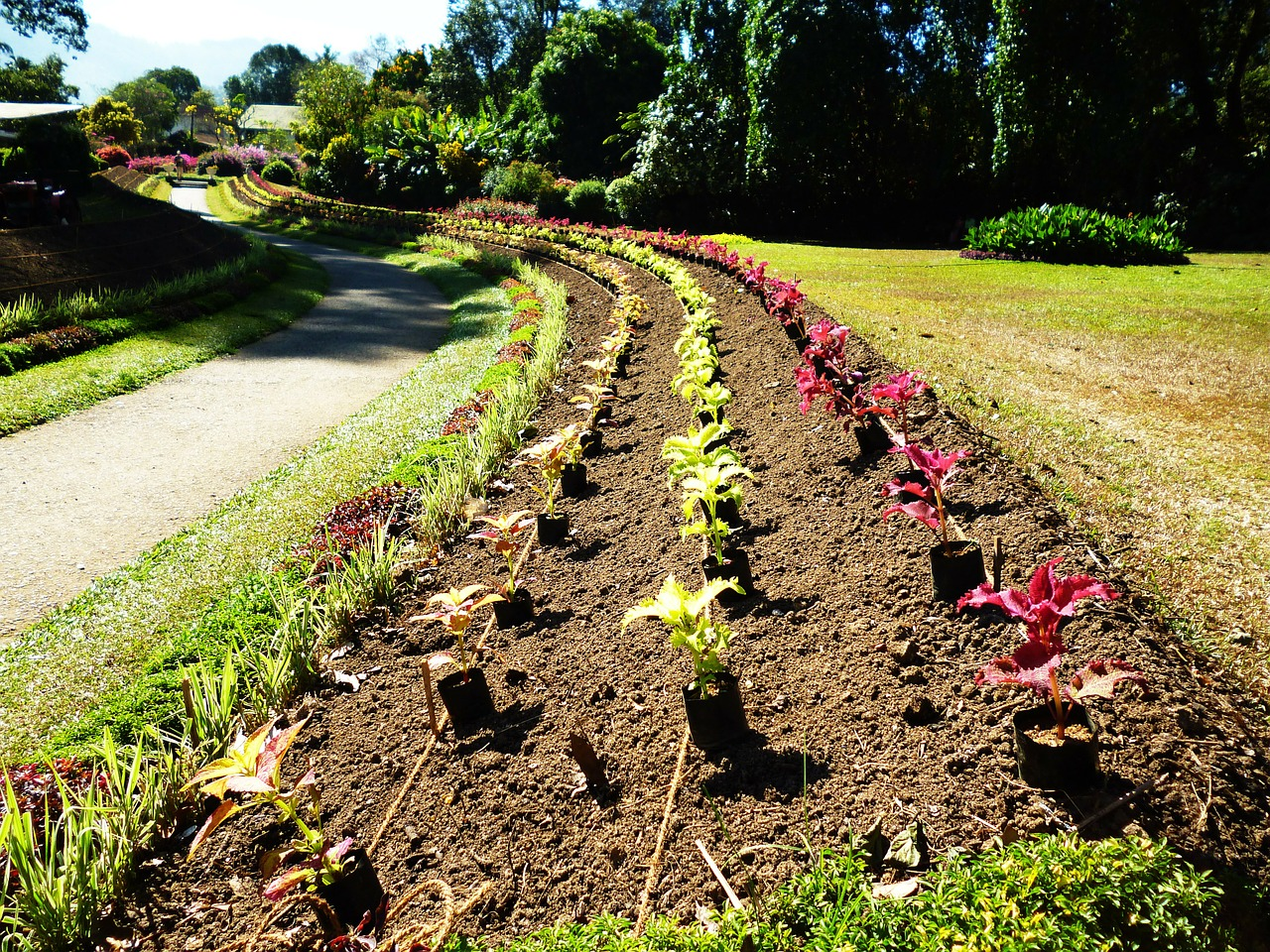 How To Effortlessly Start A Flower Bed From Scratch